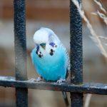 セキセイインコ冬の寒さ対策!保温の仕方と適正温度
