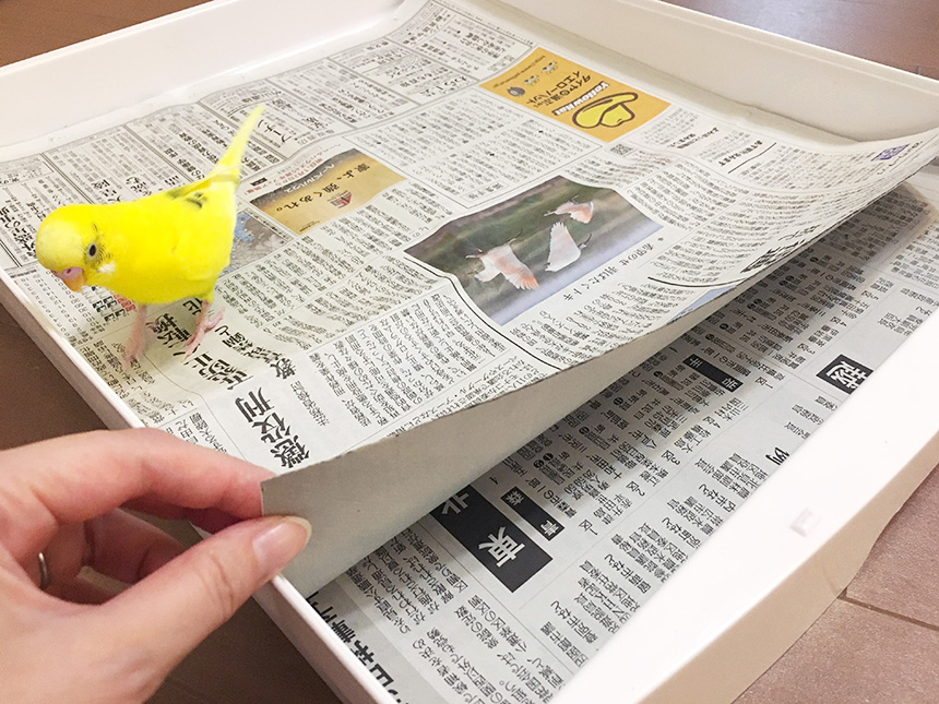 敷き紙とインコの写真