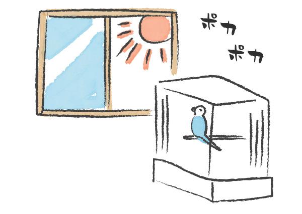 窓を開けて日光浴