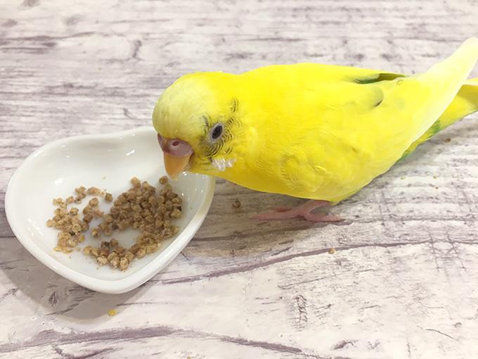 ペレットを食べるインコ